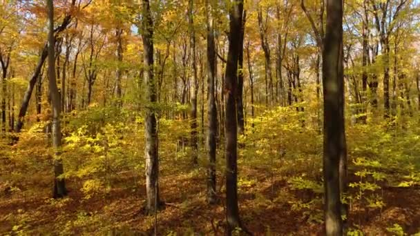 Beautiful wide natural forest of trees loosing leaf in fall in Toronto, Canada
