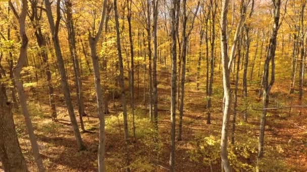 Few leaves falling off trees in autumn filmed by drone flying very slowly