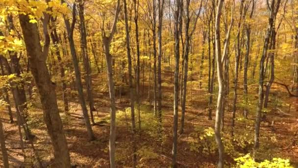 Establishing aerial shot of forest in fall on sunny day with bright colorful leaves