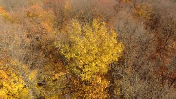 Blízký záběr stromů na podzim s odumřelou větví a odumřelými žlutými listy