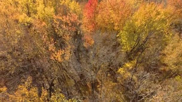 Stromy s listy a další bez listů viděné dronem na podzim