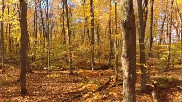 Dron stoupá v přímé linii uvnitř krásného lesa na podzim s pomerančovníky