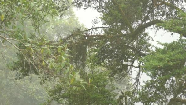 Sotva viditelní ptáci žijící na stromě s hustou tropickou mlhou