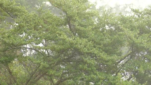 Typická scenérie endemického bubeníka v mrakovém lese Kostariky