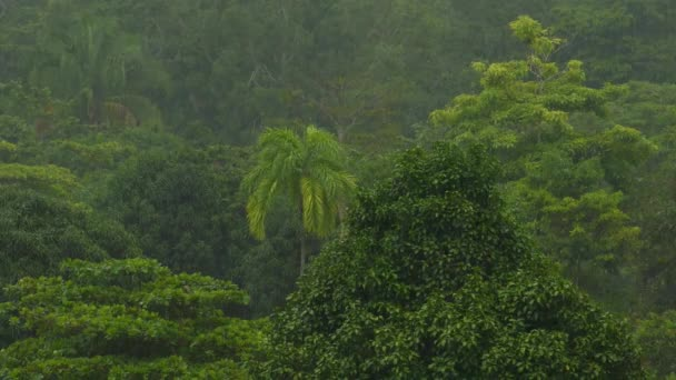 Beautiful lush rainforest on a mid afternoon rainfall in Central America
