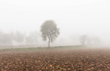 view of a crop field with trees in the background under dense fog