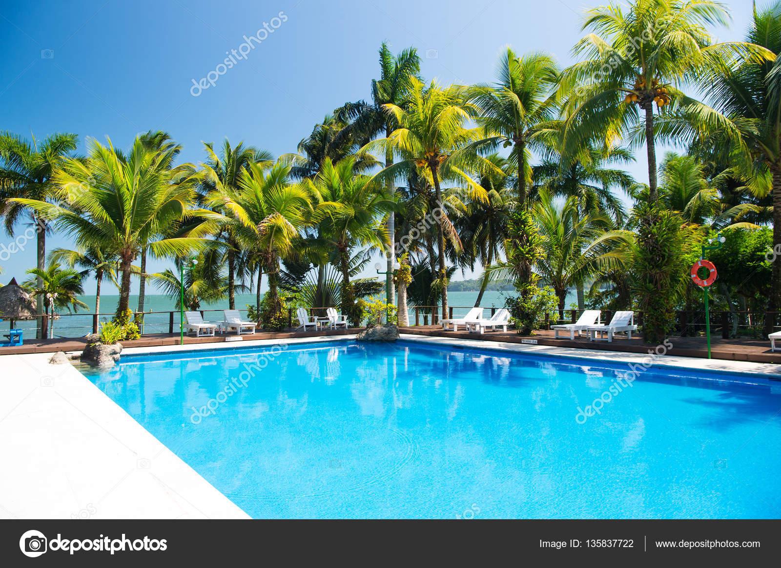 Acqua piscina e alberi di palma foto stock stetsik 135837722 - Acqua orecchie piscina ...