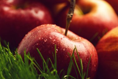 apple red color fallen on fresh green grass.
