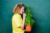 Strom života. učitelka v brýlích na hodině biologie. studium přírody ve škole. šťastná studentka s rostlinou na tabuli. vzdělávání v oblasti životního prostředí. Strom poznání. ekologie školního vzdělávání