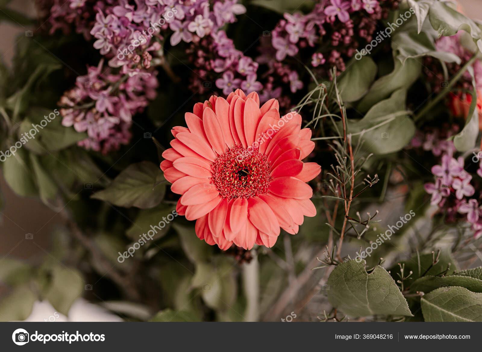 Buket Bunga Musim Semi Yang Indah Bunga Lilac Bunga Aster Stok Foto C Regina Foster 369048216