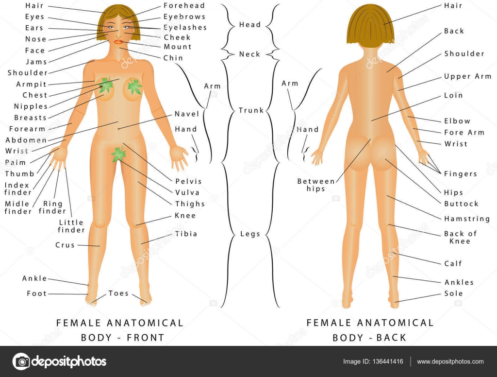 the female body at the forefront of society and media Women's body image title: female body image and the to the forefront of society and media forefront of society and media [tags: women's body.