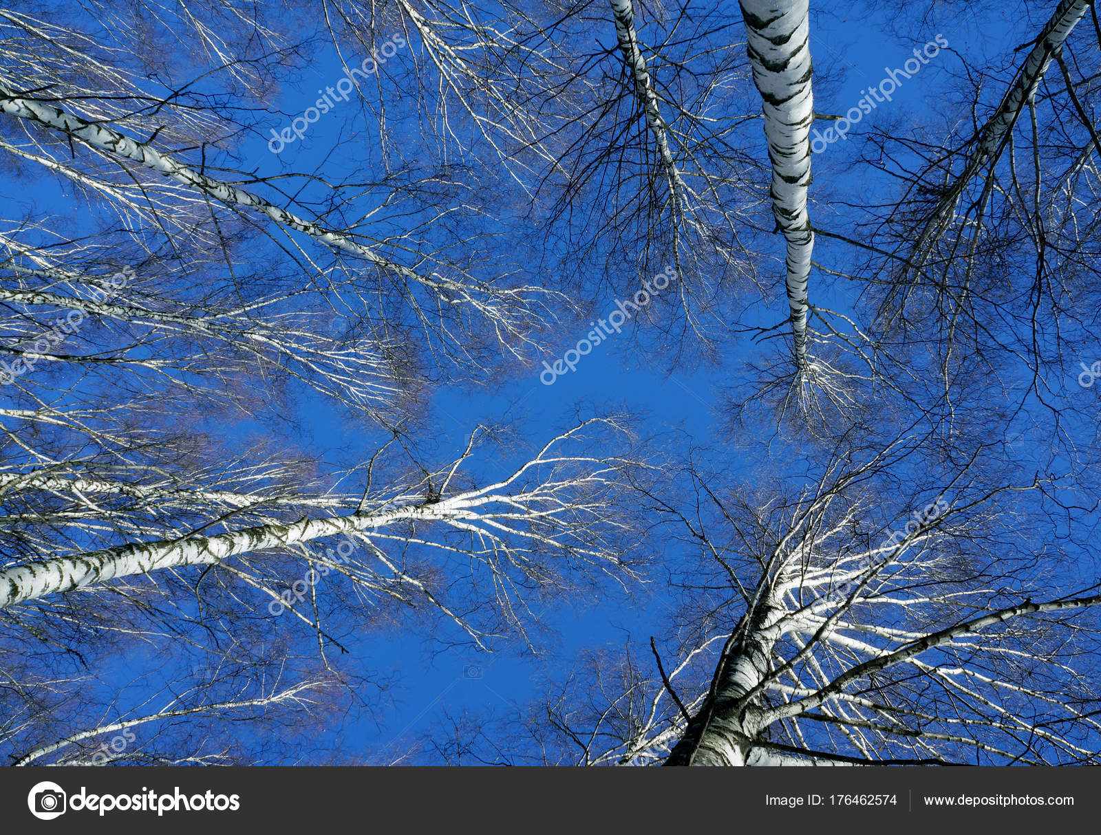 Hiver Nature Bleu Ciel Neigeux Arbres Dans Foret