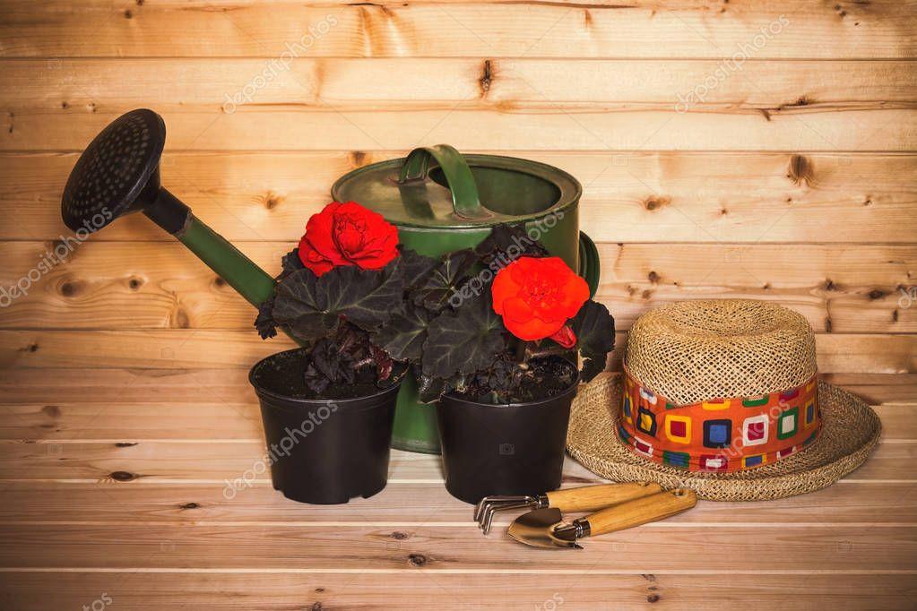 Flower seedlings, hat, gardening tools and watering can