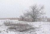 Fotografie Typický zimní krajina. Krása přírody
