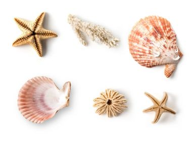 Sea set of seashells and starfish
