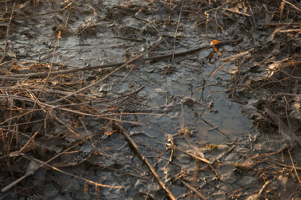 Puddle, mud, leaves, close up