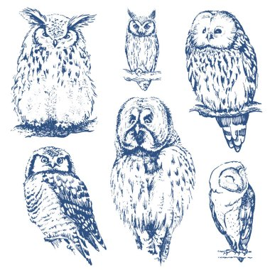 different owls collection.