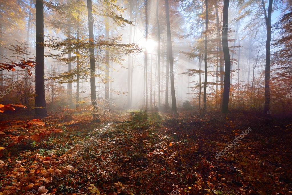 Фотообои Загадочный утренний туман в осеннем лесу