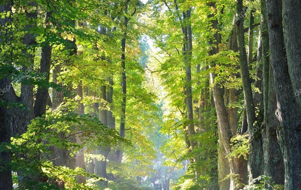 Фотообои Дорога в красивый лес утром