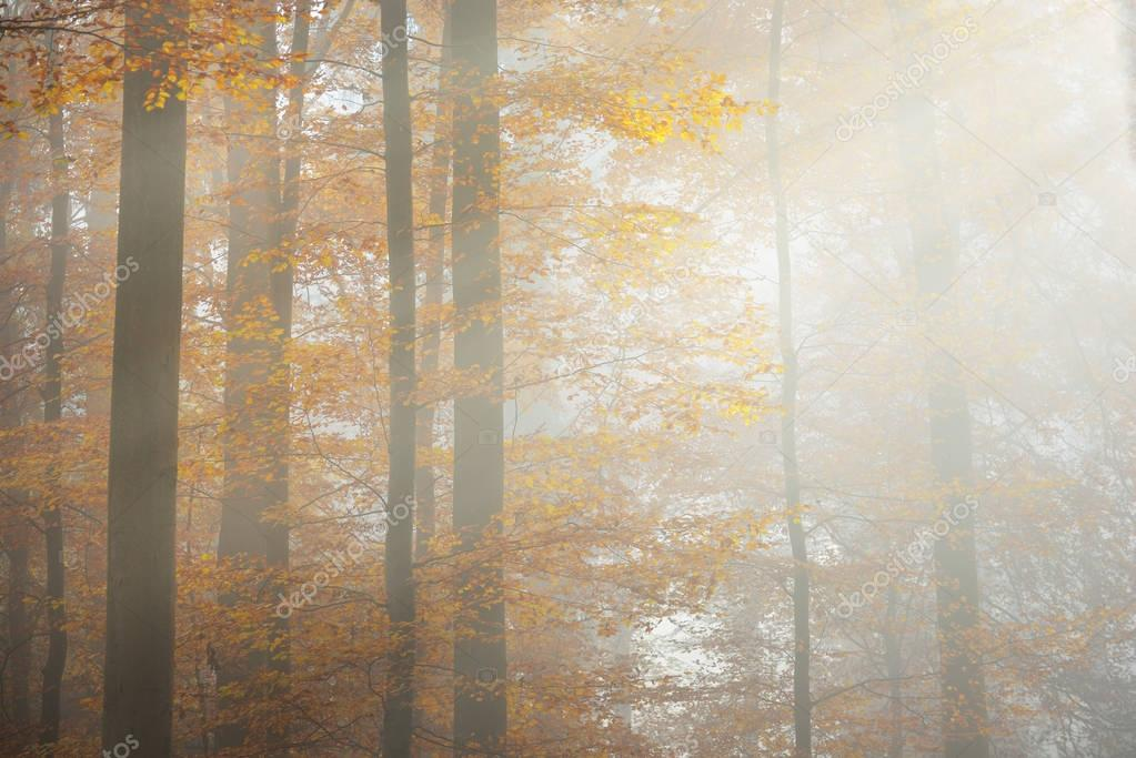 Фотообои Mysterious morning fog in a autumn forest