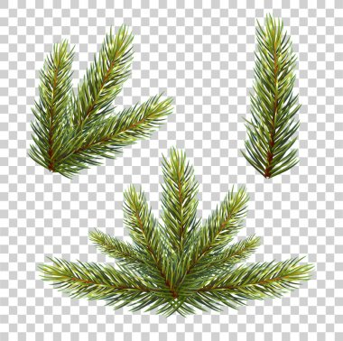 Green spruce branches set,