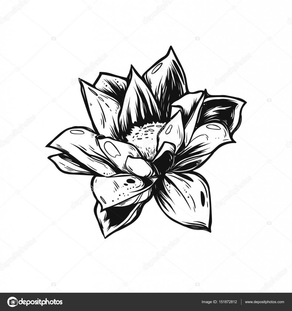 Flores Para Tatuar En Blanco Y Negro Hermosa Flor Blanco Y Negro