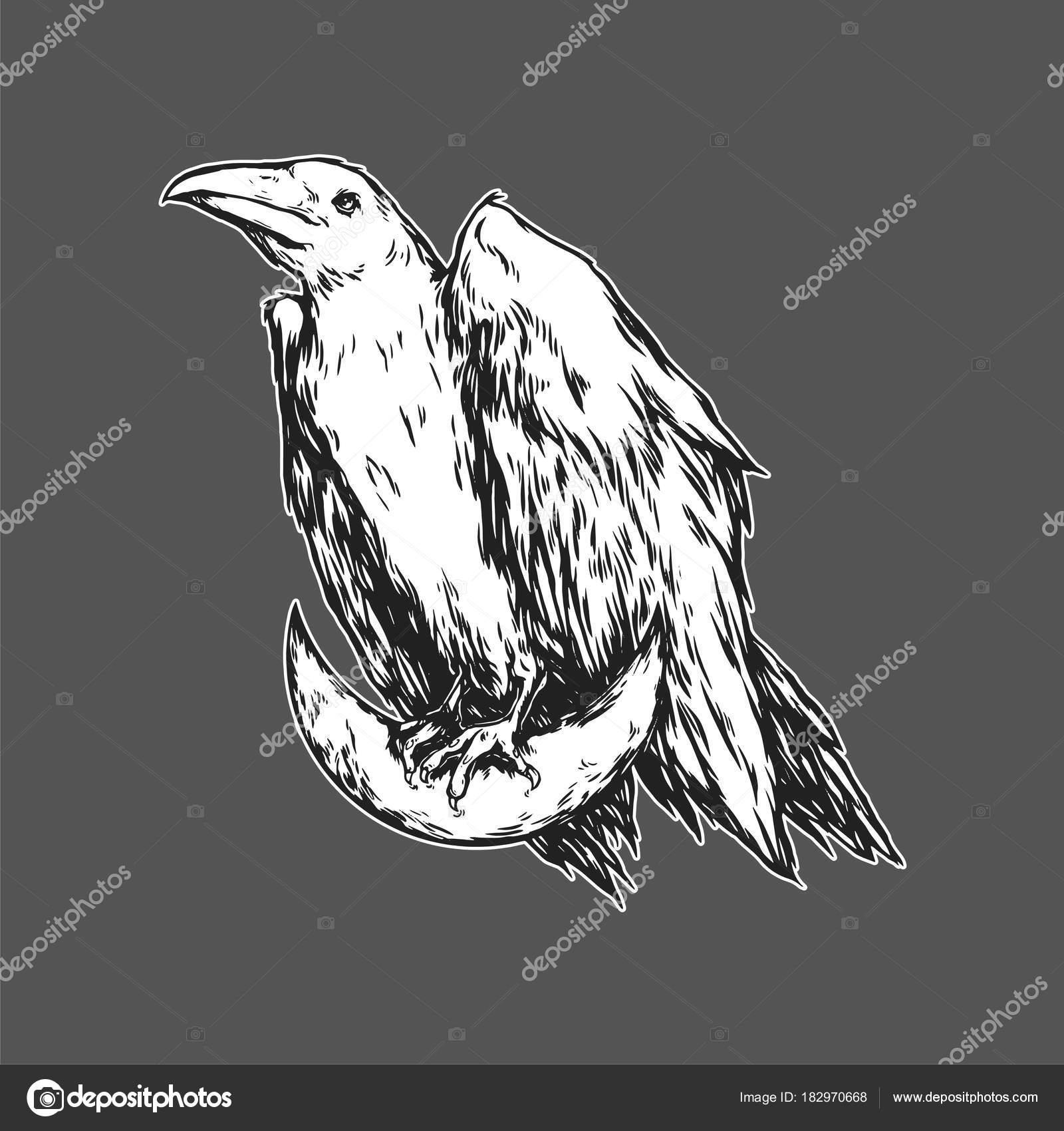 Cuervo Blanco Sentado Luna Media Luna Cuervo Gráfico Ilustración ...