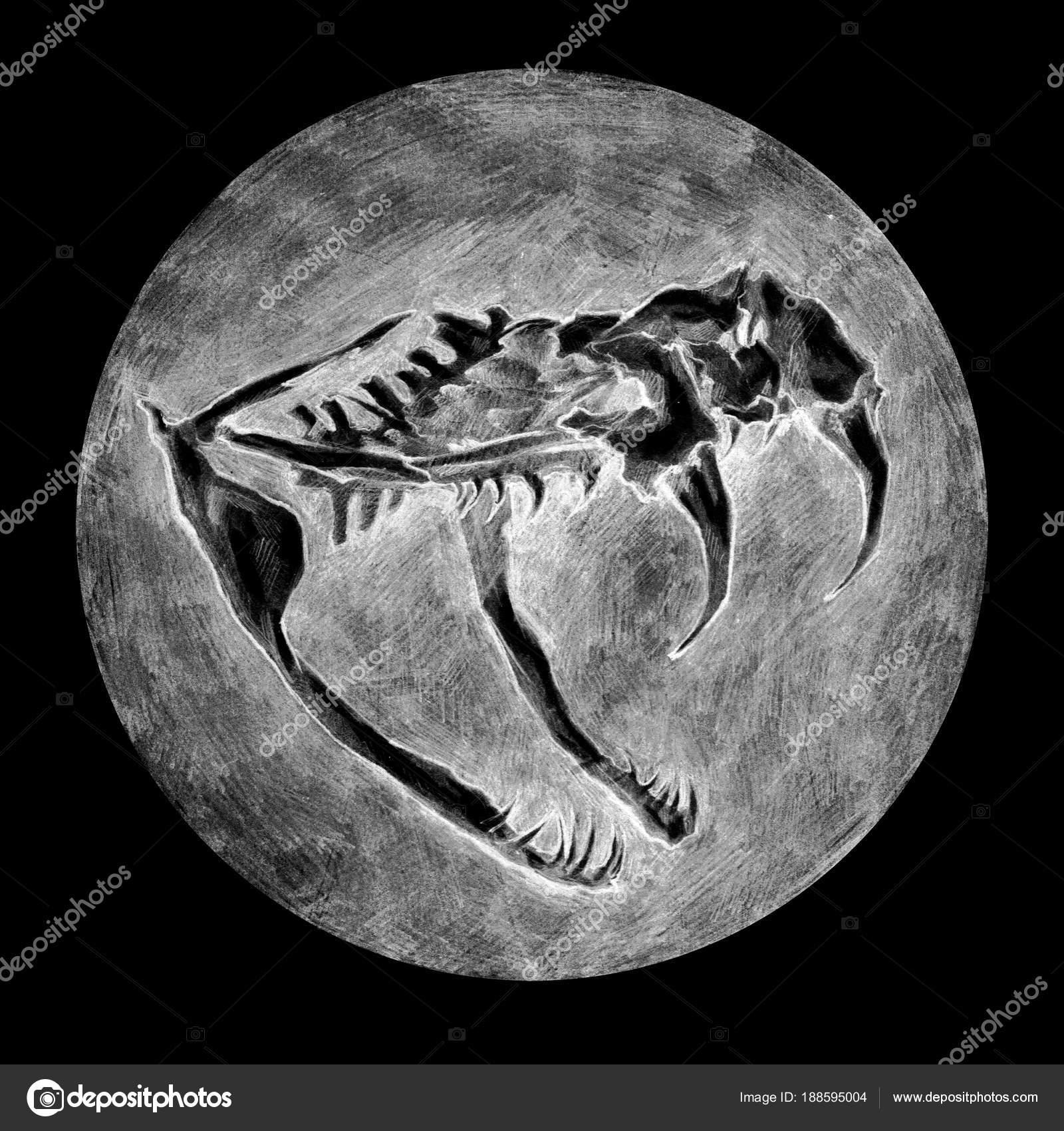 Anatomical Drawing Snake Skull Animals Anatomy — Stock Photo ...