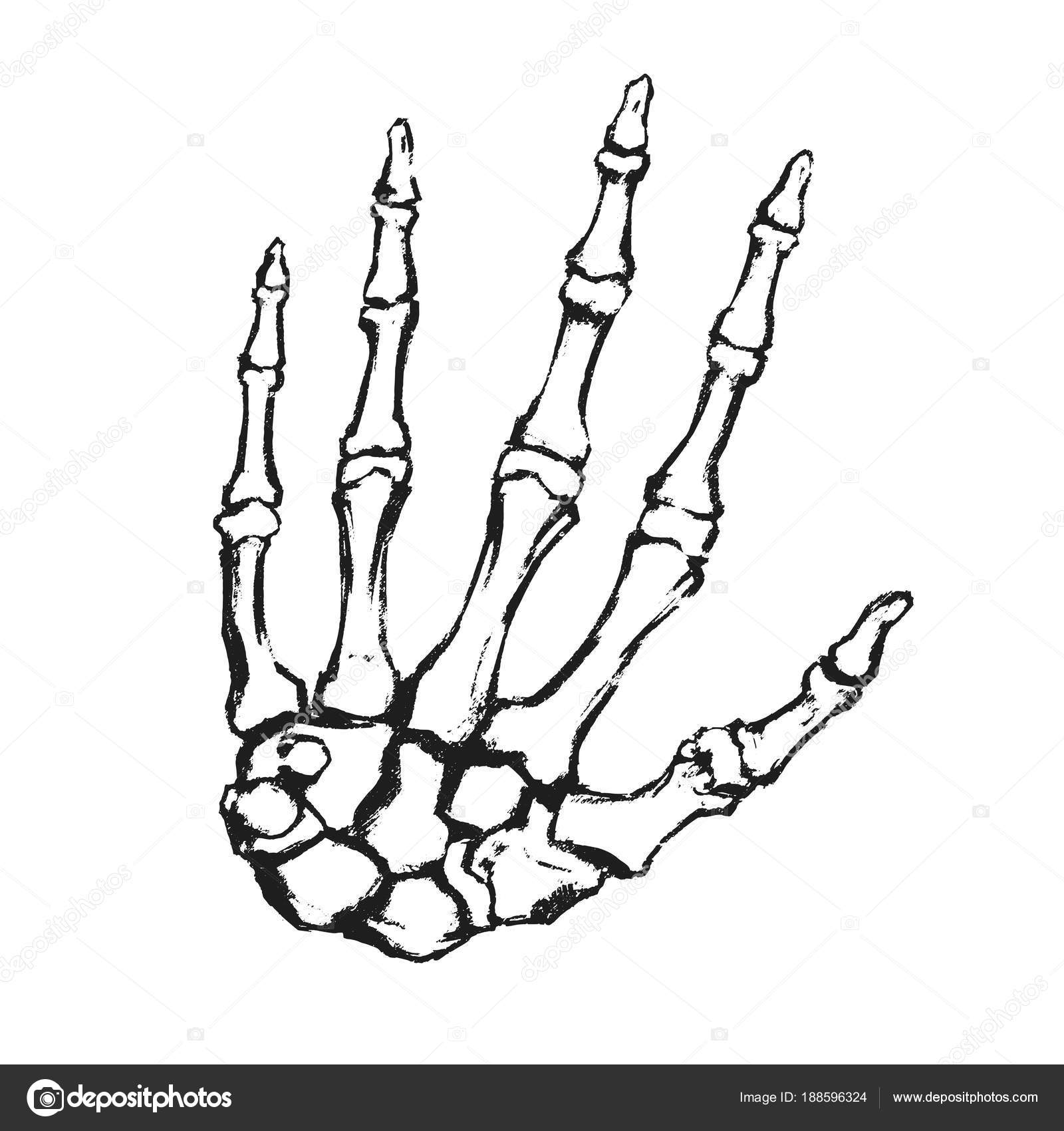 Hand Gezeichnet Hand Bones Anatomische Zeichnung Menschliche Skelett ...
