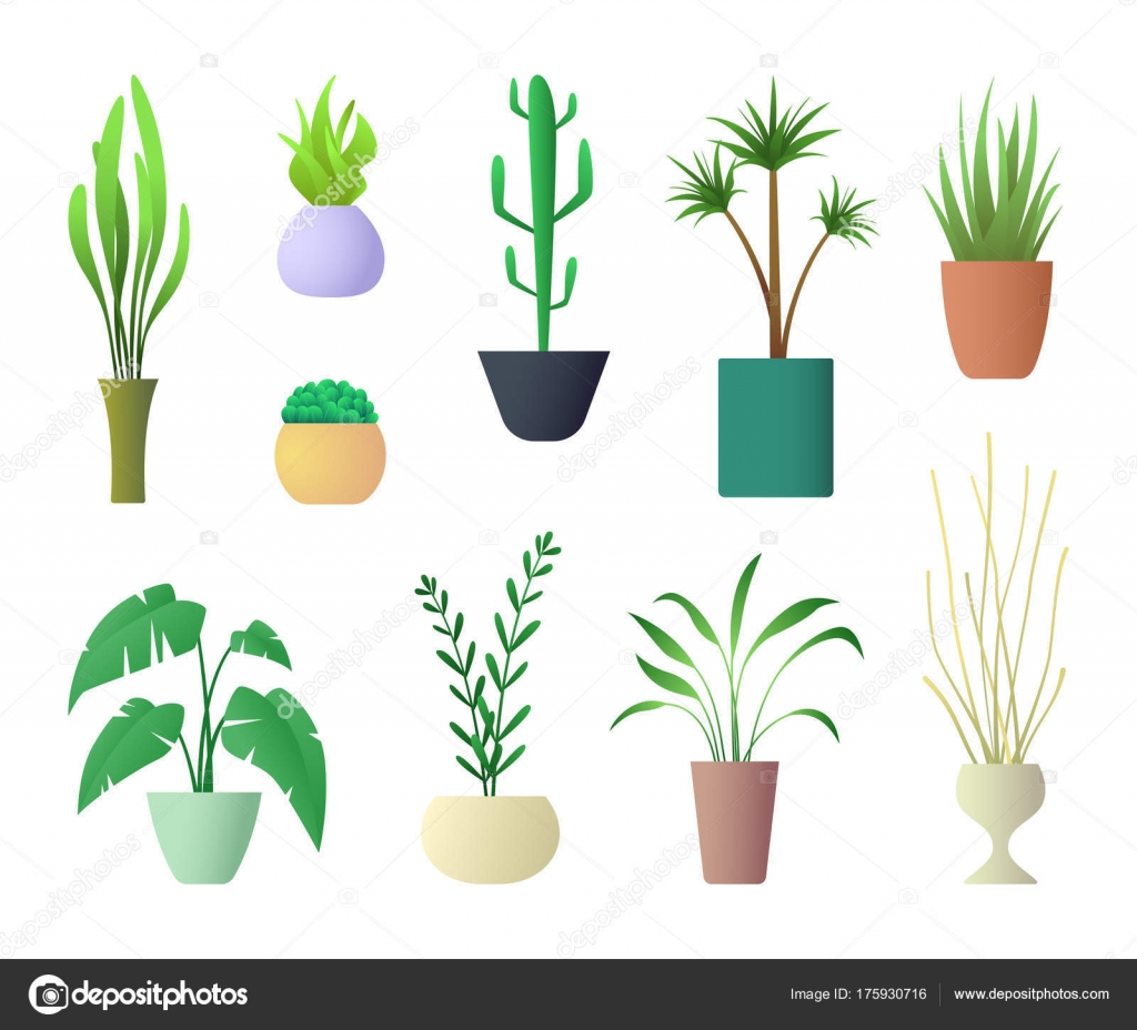 indoor home office plants royalty. Plants Interior For Home Hotel Or Office. Vector Illustration Of Potted Plant. \u2014 Stock Indoor Office Royalty E