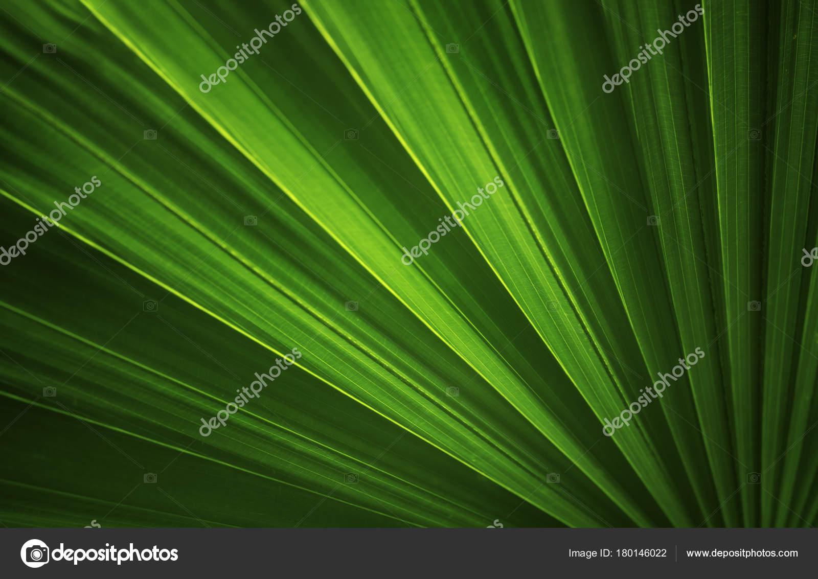 Dark Green Leaves Wallpaper Dark Green Leaves Background