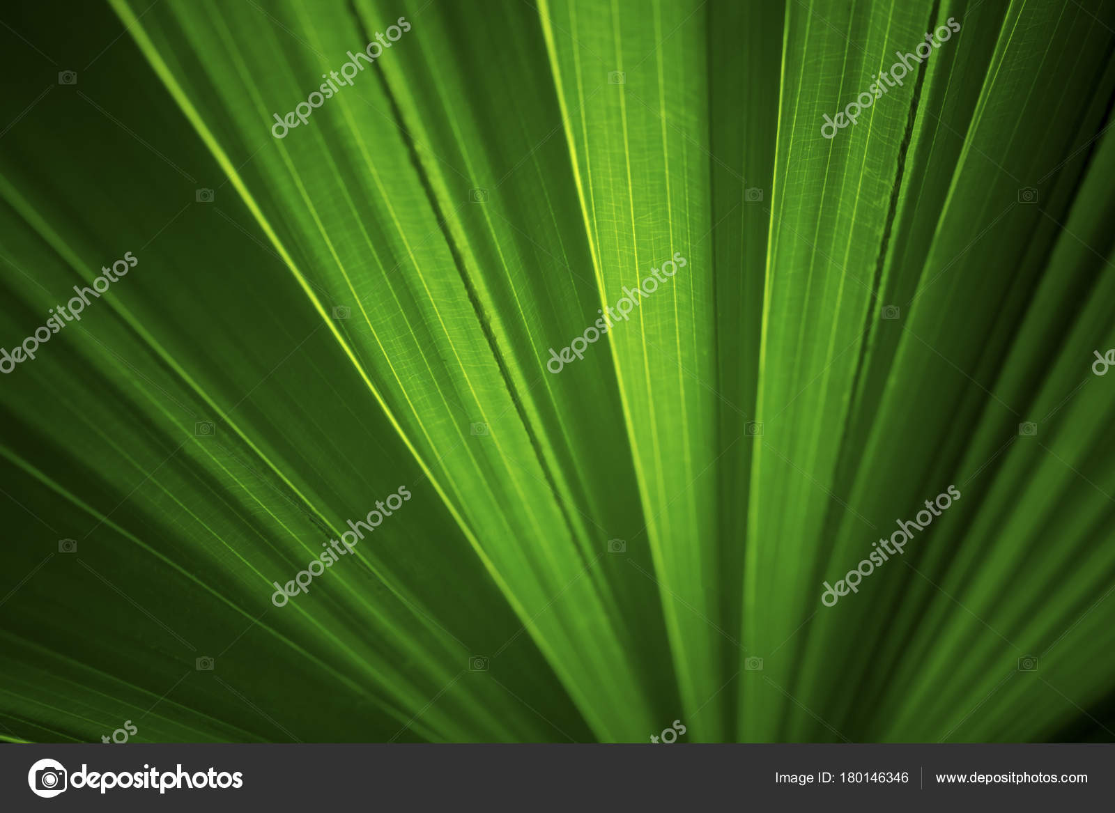 Dark Green Leaves Background And Wallpaper Stock Photo C Ngad