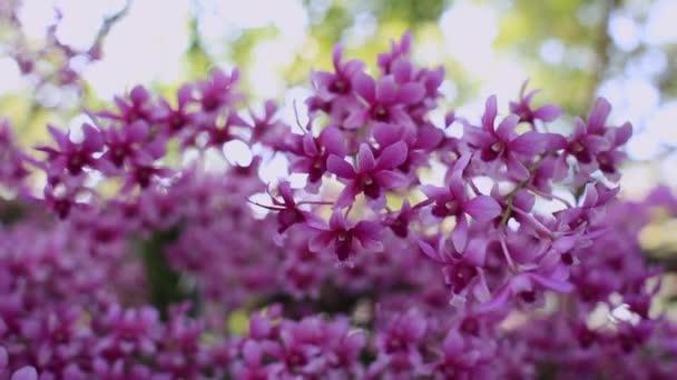 Krásná orchidej větev květ v zahradě, Zemědělství koncept.