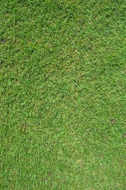 Green grass field for football