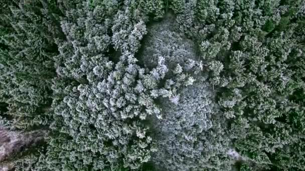 Overhead drone shot in motion over a dense coniferous reserve  (British Columbia, Canada)