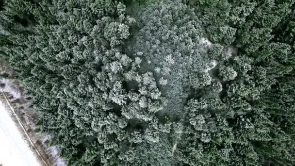 Overhead aerial camera moving over dense blue coniferous forest  (British Columbia, Canada)