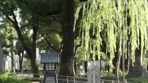 Weidenbaum in der Sonne mit japanischer Lampe Gartenlicht