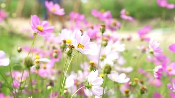 Růžové květy na zářivě zelené letní pole