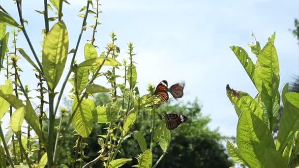 Video di farfalle monarca che volano intorno alle piante