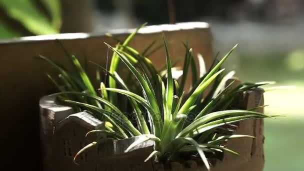 Aloe vera a kaktus keramicky hrnec s ranní slunce obsazení na výsadbu