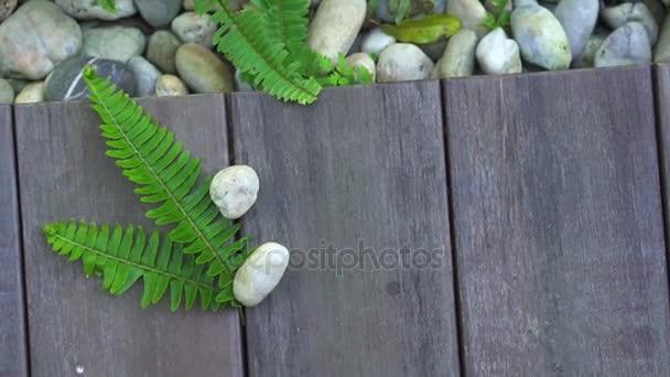 Kapradí a oblázkové kameny na dřevo podlahové přirozeného pozadí textury s kopií prostor