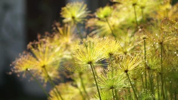 Vodní rostliny papyrus strom rostliny v krásném slunečním světle