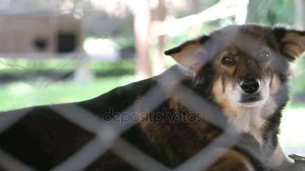 Kutyák-ban menedék mögött nettó kalitka. Keres, és várja az embereket, hogy fogadjanak el