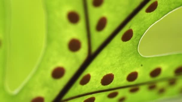 Video zelený přírodní svěží a život začíná abstraktní pozadí