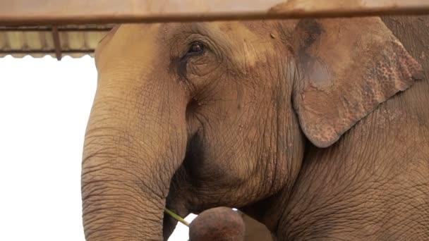 Happy elephant jíst pomocí kufru sehnat jídlo do úst
