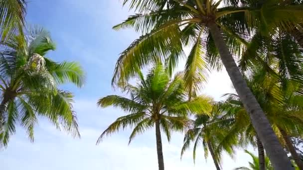 HD Paradise island concept. Coconut palm tree under sunshine at beautiful tropical beach — Stock