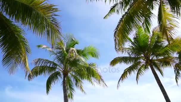 Koncept HD Paradise island. Kokosová palma pod sluncem v krásné tropické pláže