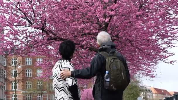 www Kirschblüten asiatische Dating
