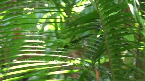 Fogliame verde lussureggiante del video girato foresta tropicale