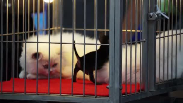 Malý pes hrát s nudit kočka v kleci na pet shop 4k